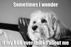BOB_review