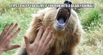 Tips To Keep You Alive If You Run Into A Deadly Animal