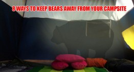 8 Ways To Keep Bears Away From Your Campsite