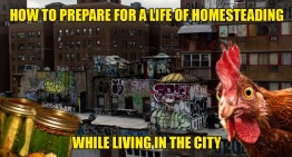 How To Prepare For A Life Of Homesteading While Living In The City