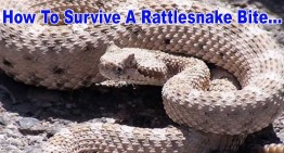 How To Survive A Rattlesnake Bite!
