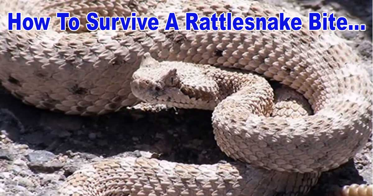 Survive Rattlesnake Bite