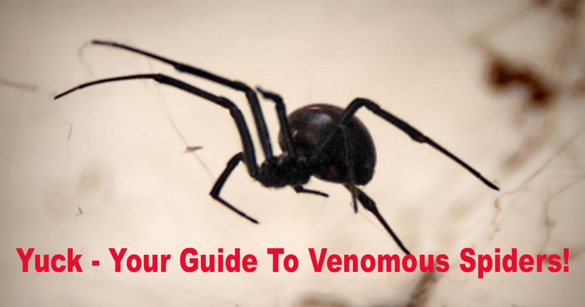 Venomous Spiders