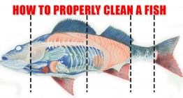 How To Properly Clean A Fish