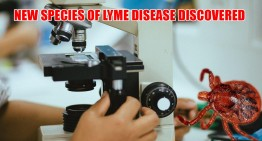 New Species of Lyme Disease Discovered