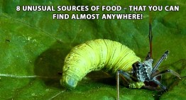 8 Unusual Sources Of Food – That You Can Find Almost Anywhere